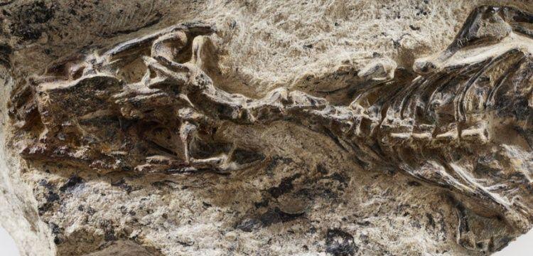 İtalya'da 240 milyon yıllık kertenkele fosili bulundu
