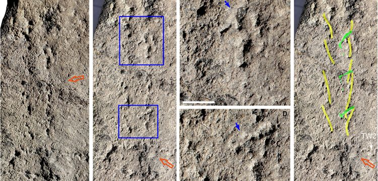 551 milyon yıl önce yürüyen bir canlının ayak izleri bulundu