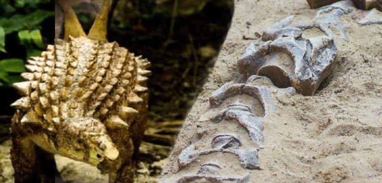 Meksika'da 85 milyon yıllık yeni dinozor türü keşfedildi: