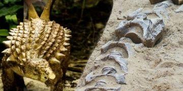 Meksikada 85 milyon yıllık yeni dinozor türü keşfedildi: