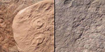 580 ila 540 milyon yıl önce yaşamış iki canlının fosilleri bulundu
