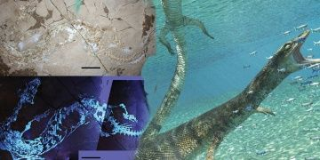 İtalyada 70 milyon yıllık deniz kertenkelesi fosili keşfedildi