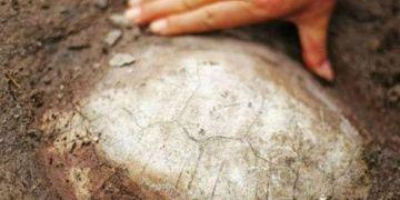 Çinli çiftçi tarlada 150 milyon yıllık kaplumbağa fosili buldu