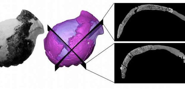 4 milyon yıllık insansı kafatası, insana benzerliği ile şaşırttı