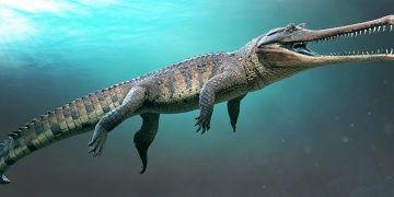 Timsah sanılan dinozor: Bir yakınsak evrim yanılgısı