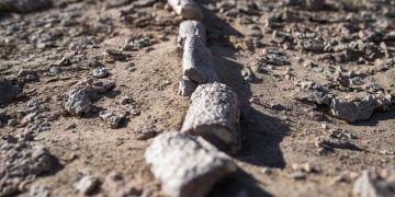 Gobi Çölünde biri T-Rexin kuzeni 3 yeni dinozor türü bulundu
