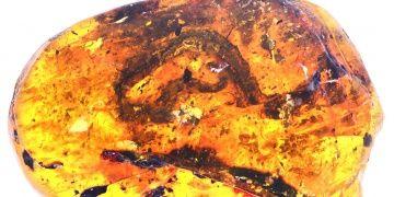 En eski yavru yılan fosili bulundu