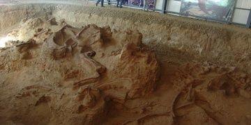 Çinde fosili bulunan dinozor türüne muhteşem ejderha adı verildi