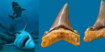 25 milyon yıl önce yaşamış dev köpek balığının dişleri bulundu
