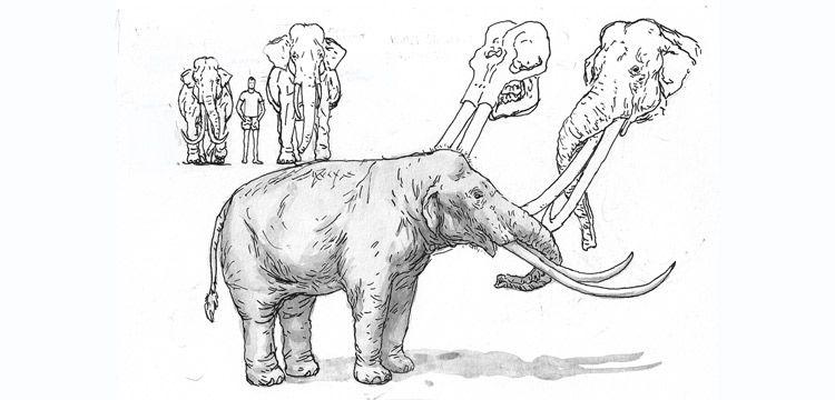 Cezayir'de 3 milyon yıllık fil fosili bulundu