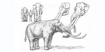 Cezayirde 3 milyon yıllık fil fosili bulundu