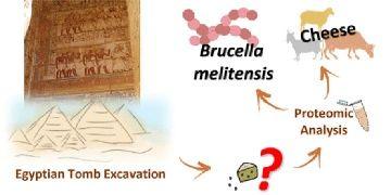 Mısırda keşfedilen 3300 yıllık peynirde brusella bakterisi bulundu