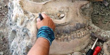 Çankırıda 8,5 milyon yıllık Gergedan kafatası bulundu