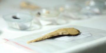Direkli Mağarasındaki arkeolojik keşifler arkeologları şaşırtıyor