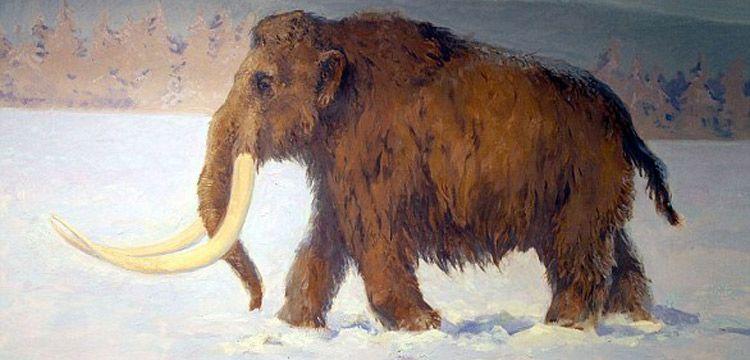 Avusturya'da taş devrinde tüylü mamut avlanılan alan keşfedildi