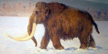 Avusturyada taş devrinde tüylü mamut avlanılan alan keşfedildi