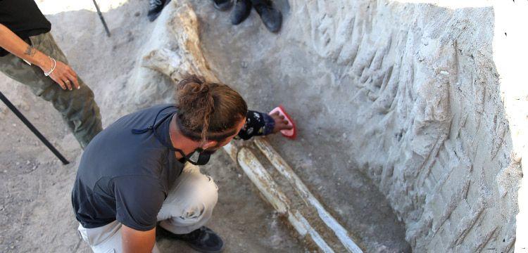 Kayseri'de 7,5 milyon yıllık Türkiye'nin en büyük fosili bulundu