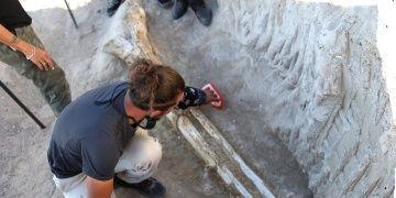 Kayseride 7,5 milyon yıllık Türkiyenin en büyük fosili bulundu