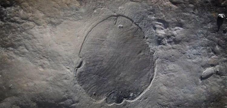 Bilinen en eski hayvan fosili bulundu ve 70 yıllık gizem çözüldü