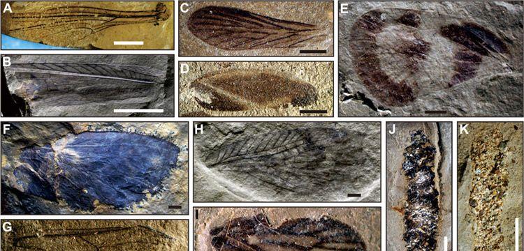 Paleontologlar Çin'de 230 milyon yıllık yüzlerce böcek fosili buldu