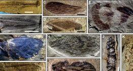 Paleontologlar Çinde 230 milyon yıllık yüzlerce böcek fosili buldu