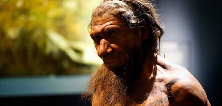 Neanderthals had hands capable of 'precision work', researchers find