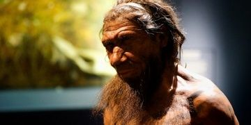 Neanderthals had hands capable of precision work, researchers find