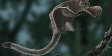 Oldest flying squirrel fossil found in Spain