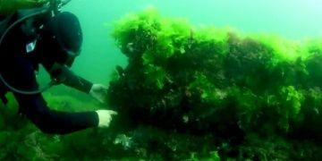 İstanbulun batık adası Vordonisiye dair güncel bilgiler