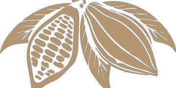 Kahvenin 3600 yıl önce Orta Amerikada evcilleştirildiği tespit edildi