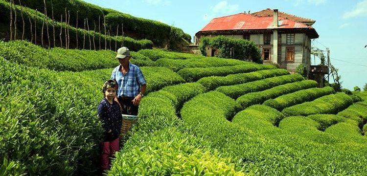Karadeniz'e turistik çay köyleri kurulacak