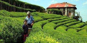 Karadenize turistik çay köyleri kurulacak