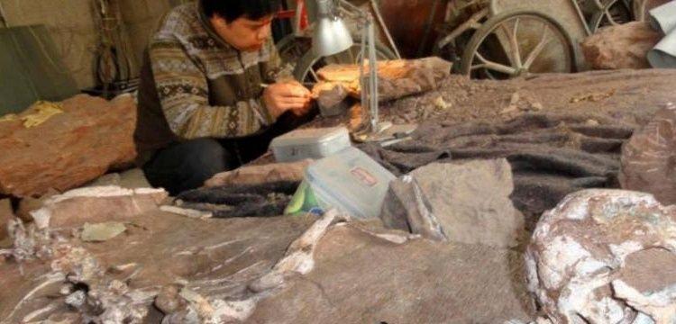 Arjantin'de 3 ayrı tür dinozora ait fosiller bulundu