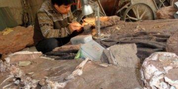 Arjantinde 3 ayrı tür dinozora ait fosiller bulundu