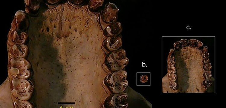 Kenya'da 12 milyon yaşında 3 buçuk kiloluk maymun fosili bulundu