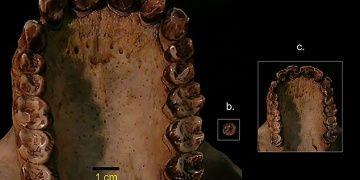 Kenyada 12 milyon yaşında 3 buçuk kiloluk maymun fosili bulundu
