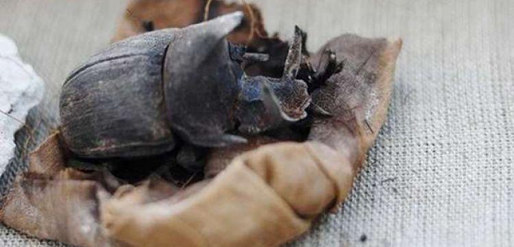 Mısır'da 7 firavun mezarı ve çok sayıda bok böceği mumyası bulundu