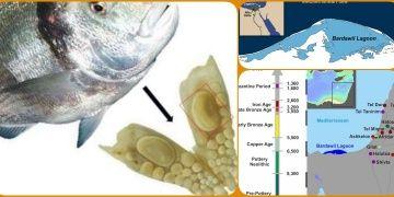 Kenan ve Mısır arasındaki balık ticareti 3500 yıl önceye uzanıyor