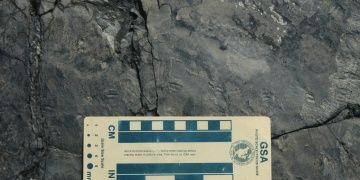 Serçe kadar küçük dinozora ait ayak izleri bulundu