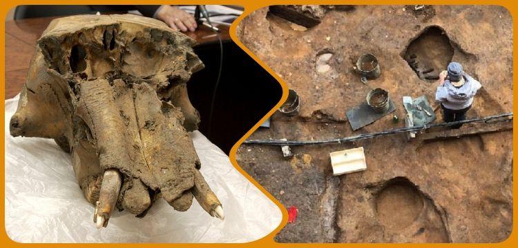 Rusya'da alet kutusu gibi kullanılmış mamut kafatası bulundu