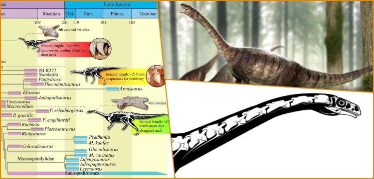 Vücuduna göre en uzun boyunlu dinozor fosili Brezilya'da bulundu