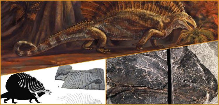 300 milyon yıllık yeni tür otobur sürüngen fosili bulundu