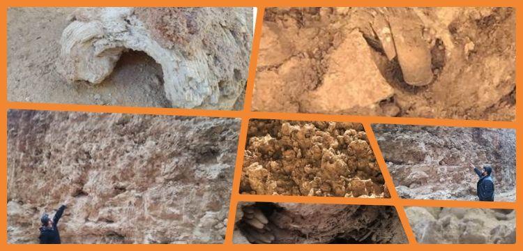 Mardinliler dinozor fosili bulduklarını iddia ettiler