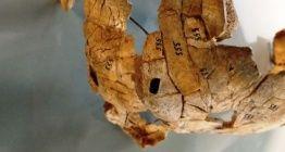 Yamyamlığa yorumlanan kafatası 8 bin yıllık cinayet kanıtı çıktı