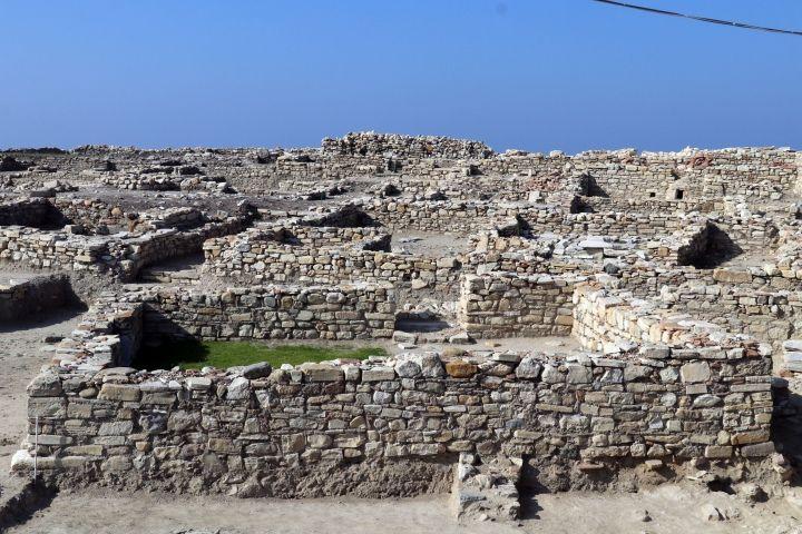 800 yıl önce Kuşadasında yaşayan kedi ve köpeklerin pati izleri bulundu