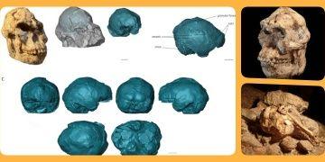 Küçük Ayakın beyin yapısı kısmen insan beynine benziyor