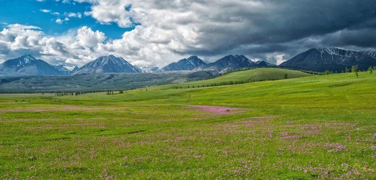 Moğolistan'da dinozor fosili satan iki kişi tutuklandı