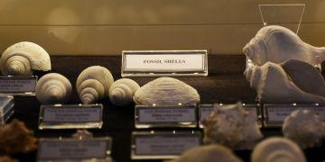 Muğlalı işadamının deniz kabuğu koleksiyonunda fosil bulundu