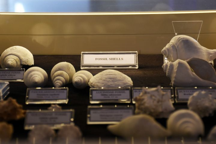 Bodrum Deniz Müzesi'nde sergilenen koleksiyonda fosil bulundu