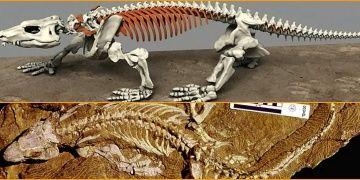 290 Milyon yıllık fosili robot olarak ayağa kaldırıldı!